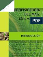 Ecofisiologia Del Maiz