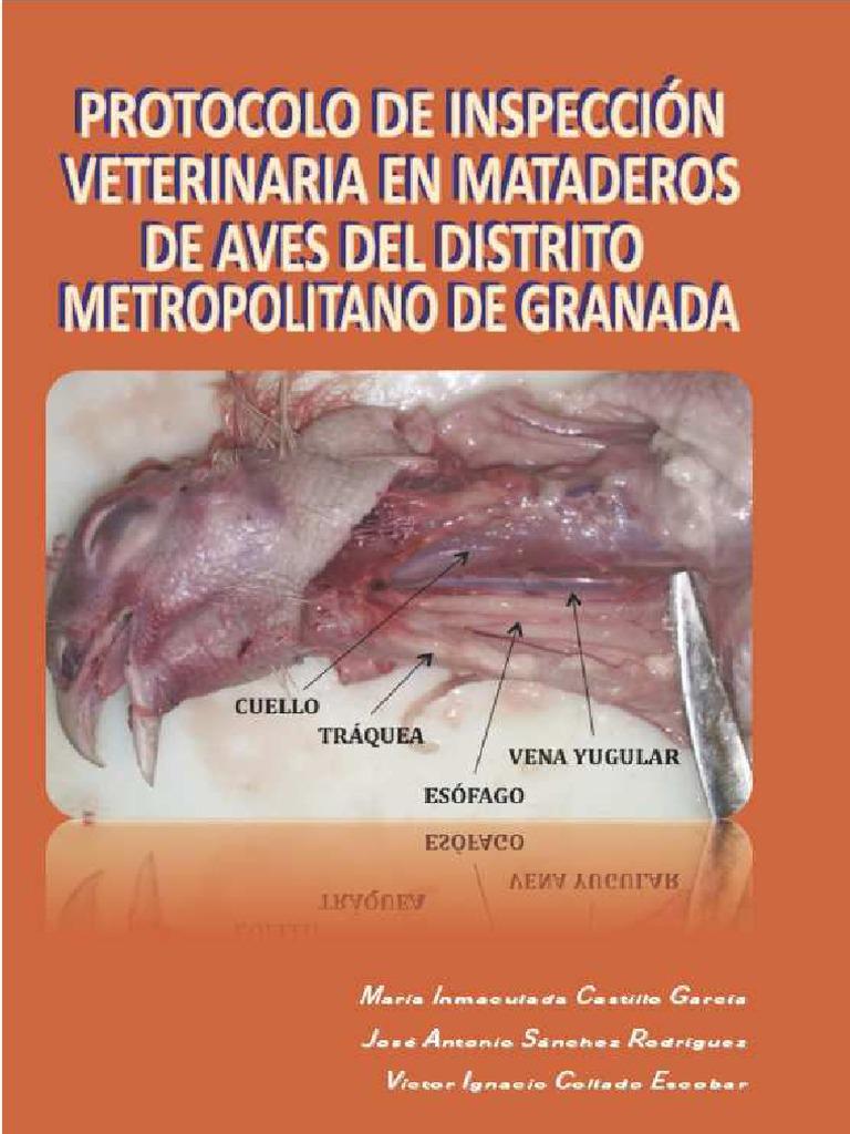 172.Protocolo Inspeccion Aves Dmg Web1