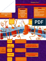 Componentes de Membrana