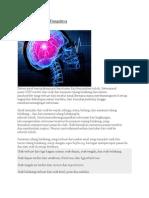 Struktur Otak Dan Fungsinya