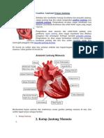 Anatomi Organ Jantung