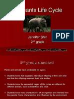 Elephants Lifecycle