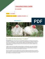 Proyectó de gallinas para carne