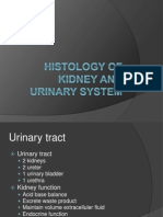Histology of Kidney and Urinary System