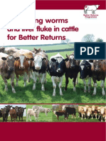 Controlling worms and liver fluke in cattle for better returns