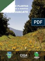 Guia herbáceas asociadas al cultivo de aguacate en Michoacán.pdf