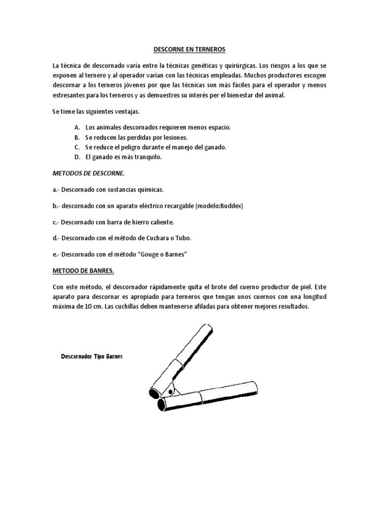 Increíble Ternero Anatomía Muscular Bandera - Imágenes de Anatomía ...