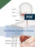 digestivesytem1
