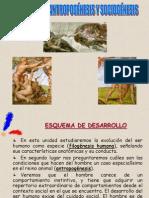 filogenesis-antropognesis