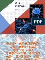 defectosmigracionneuronal-121005192459-phpapp01