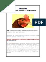 Parasitos Oculares - Gallinas