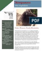 western gorilla  copy