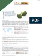 Brecol  Guía de Hortalizas y Verduras  CONSUMER EROSKI