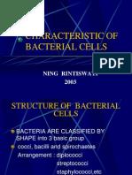 Bacteria Caracteristic