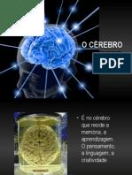 2-crebro-111110093720-phpapp01