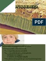 1. Odontogeneza55 Slide-uri