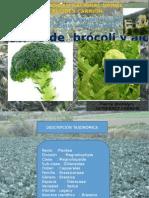 Expo Brocoli y Alcachofa