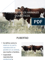 PUBERTAD ANIM-DOMÉST-pres