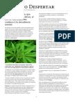 Marihuana No Causa Decadencia
