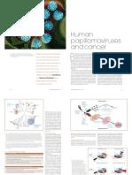 Papilomavirus e cancer.pdf