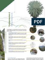 Brochure Manejo AP Duvier Olaya