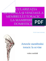 Curs 4 Anatomie Nbk.