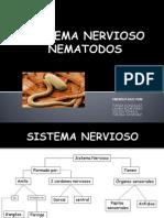 Nematodos Sistema Nervioso