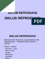 SIKLUS  REPRODUKSI