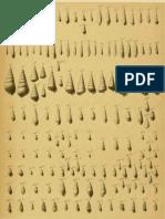 I molluschi dei terreni terziari del Piemonte e della Liguria; F. Sacco, 1892 - PARTE 11 - Paleontologia Malacologia - Conchiglie Fossili del Pliocene e Pleistocene