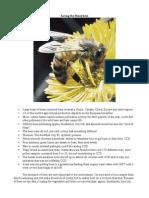 saving the honeybees