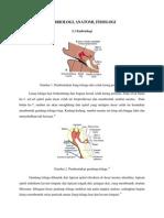 anatomi telinga.docx