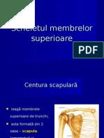 Scheletul membrelelor superioare