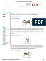 Aranhas Venenosas _ Biologia Ciência Aranhas Venenosas