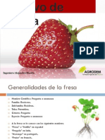 12.Cultivo de Fresa
