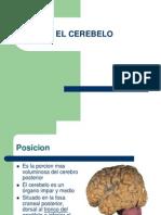 elcerebelo-100827233243-phpapp02