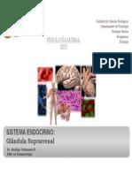 Bio299_2013_ Sist Endocrino_Suprarrenal y Tiroides