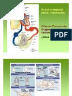 C. Respiratorio 1 2013-1