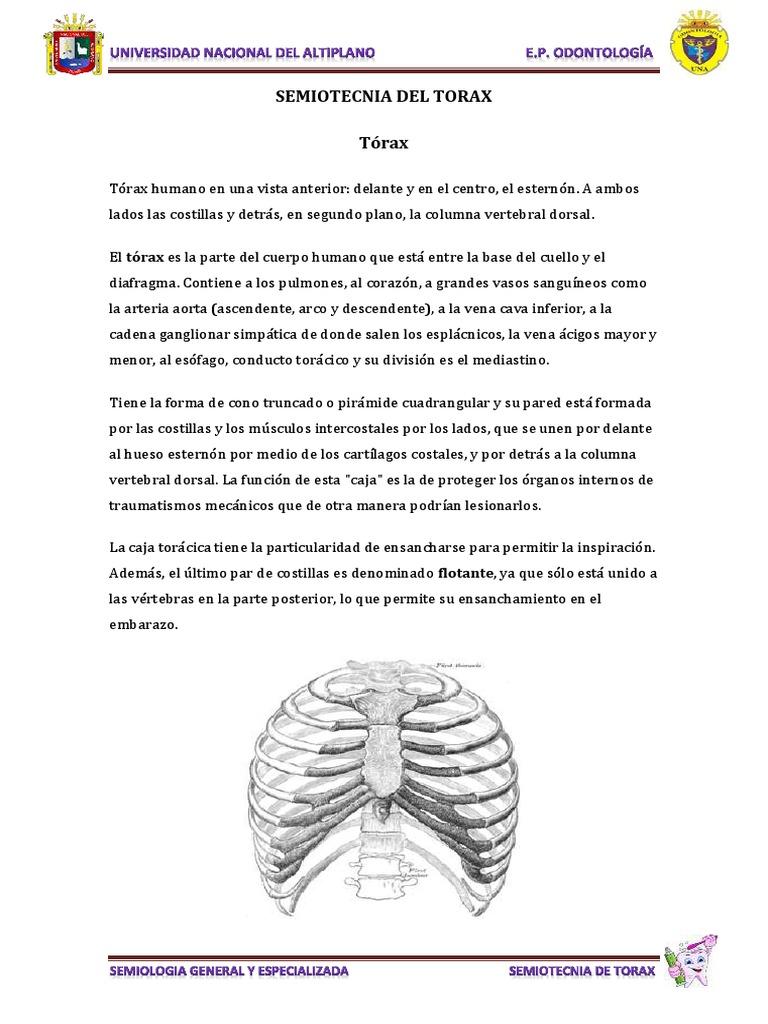 Famoso Función Del Conducto Torácico Regalo - Imágenes de Anatomía ...
