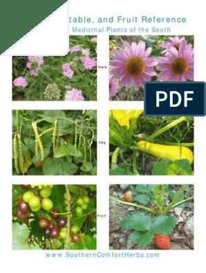 Plants | Basil | Barley