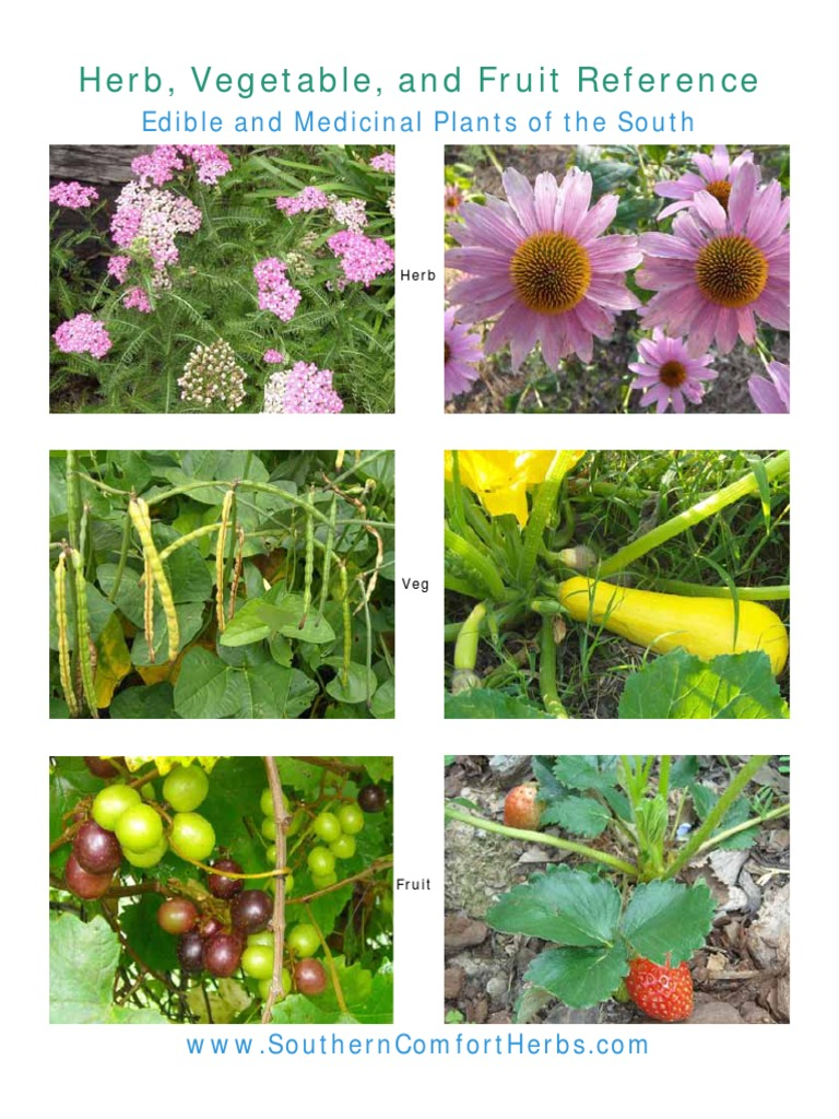 The spice doc edible and medicinal flowers - The Spice Doc Edible And Medicinal Flowers 9