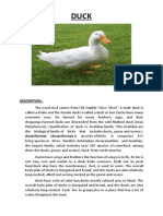 Report Text About Duck1