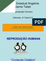 reprodução humana.ppt