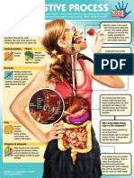 Digestive Process Infographic KIDS DISCOVER