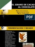 Proceso Del Cacao