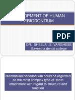 Development of Human Periodontium (1)