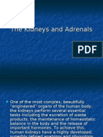 The Kidneys and Adrenals