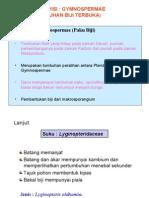 2. Gymnospermae