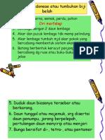 4. Apetalae