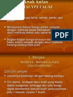 5. Dialypetalae