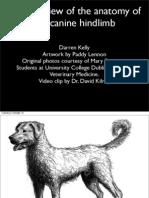 Anatomy of the Canine Hindlimb
